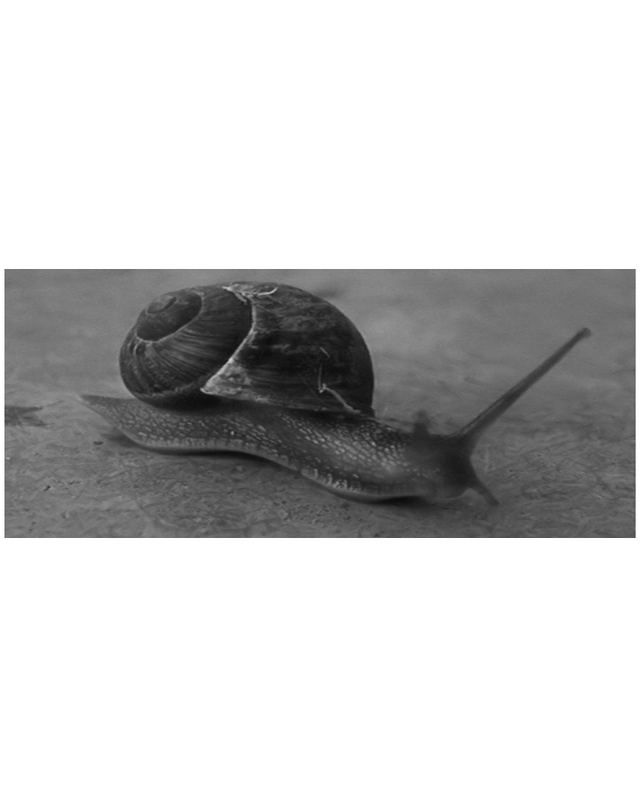 good_snail_r.png