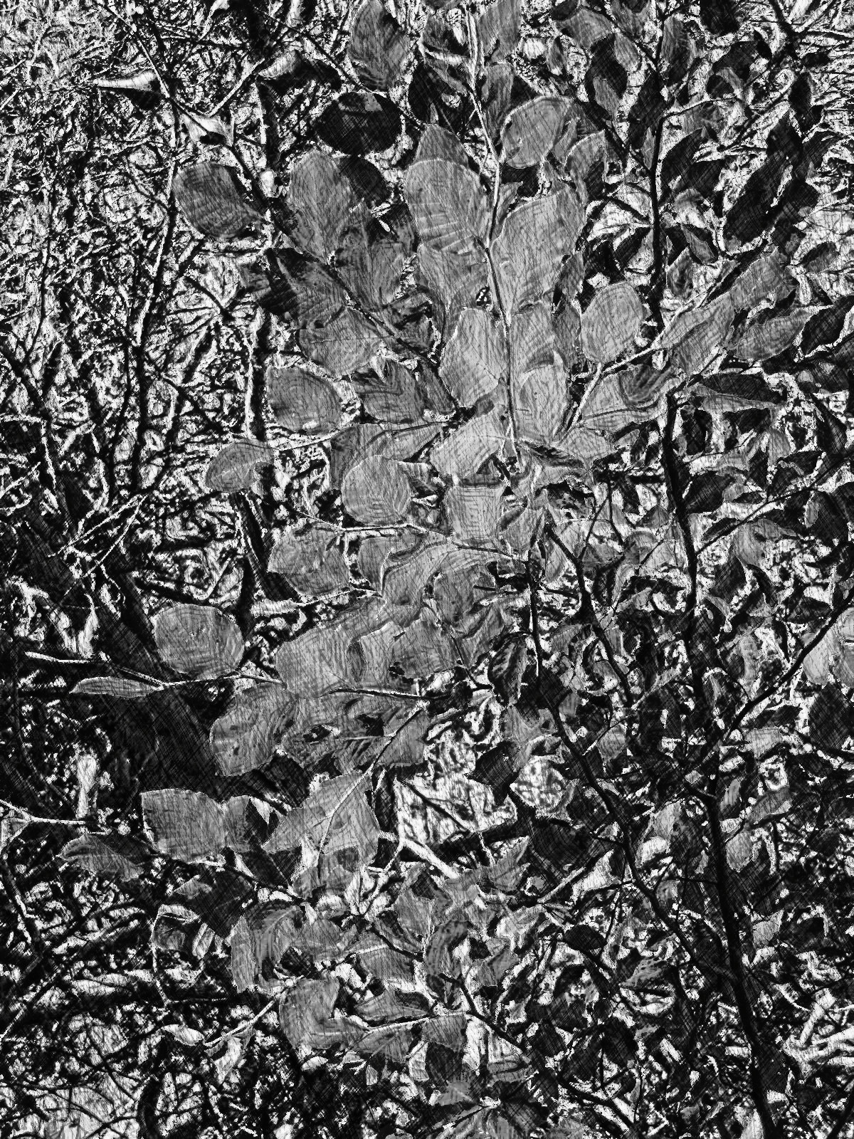 AutumnLeaves-none-intensity7-grayscale.jpg