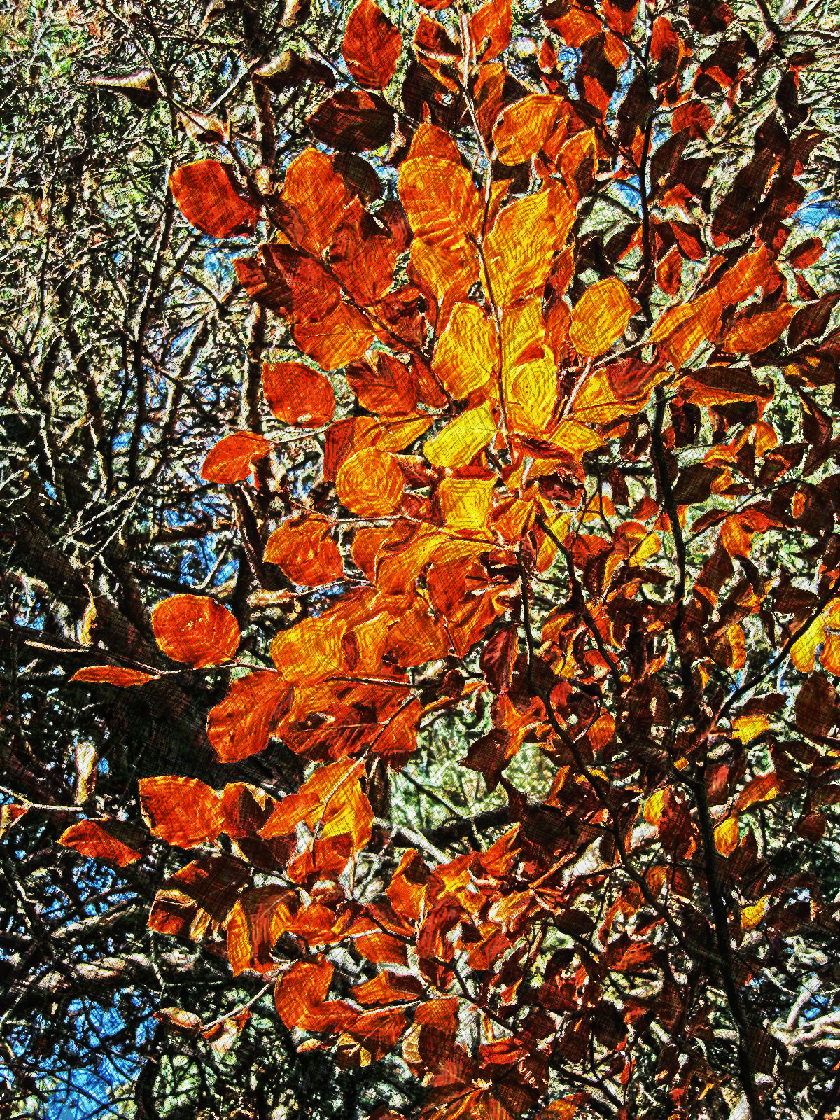 AutumnLeaves-none-intensity7-source.jpg