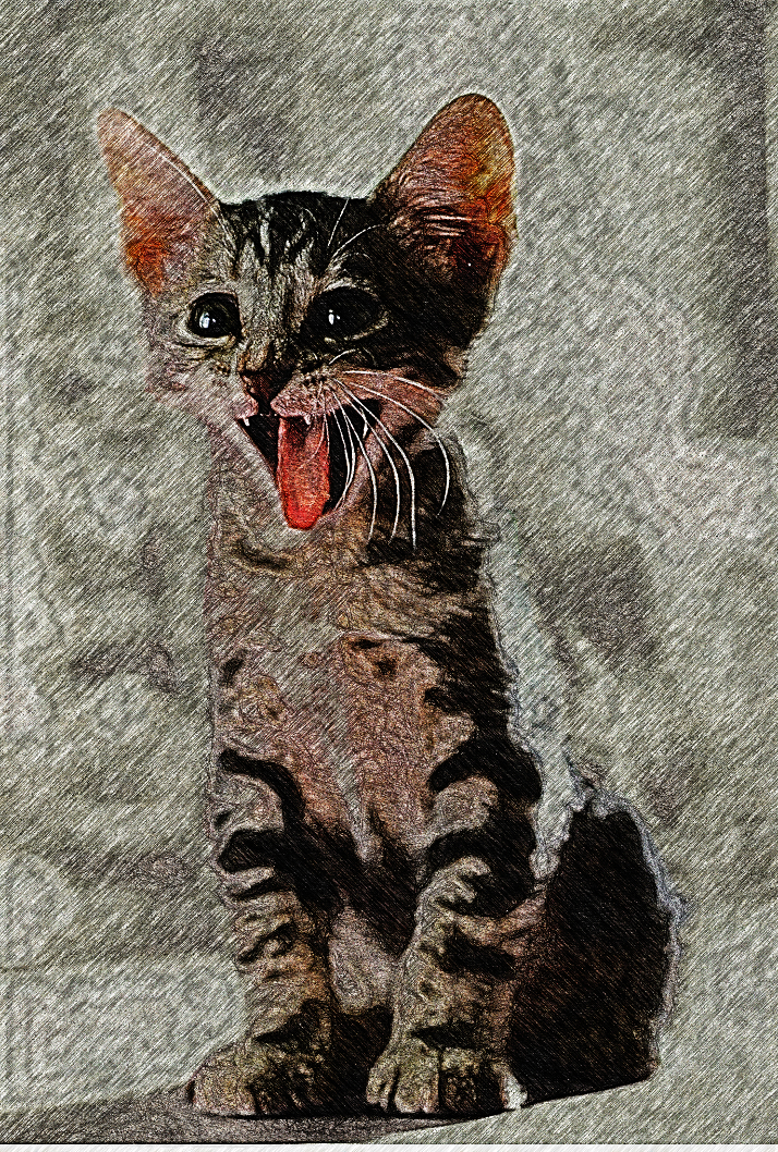 Cat.Crazy Hedcut.intensity 3.Source on top.jpg