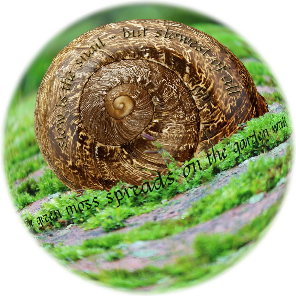 Slowly_Snail_Wall_Lens.png