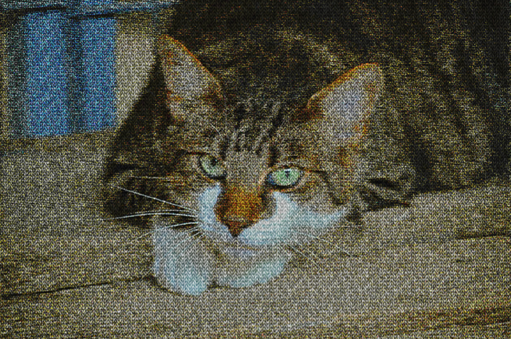 Dinasset.Plain Knit.Tabby Cat.jpg