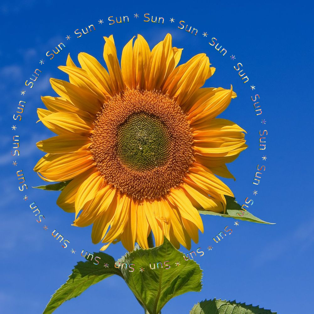 Sunflower_repeated text.jpg