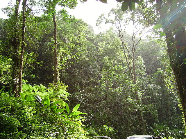640px-Tropical_forest.JPG